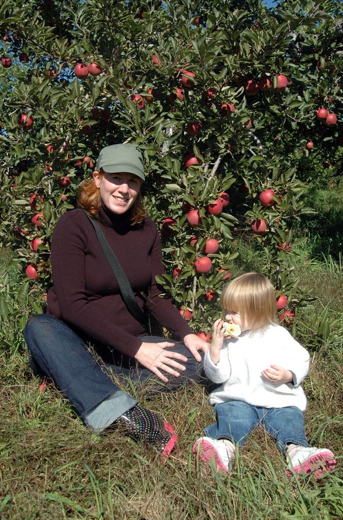 Apples2008
