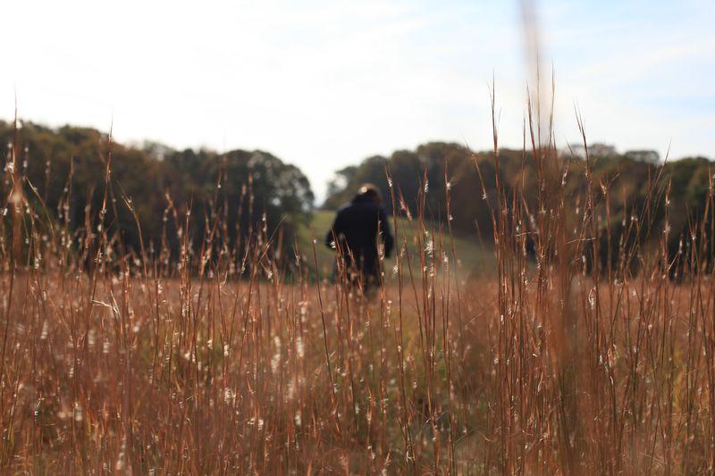 You Belong in a Wheat Field