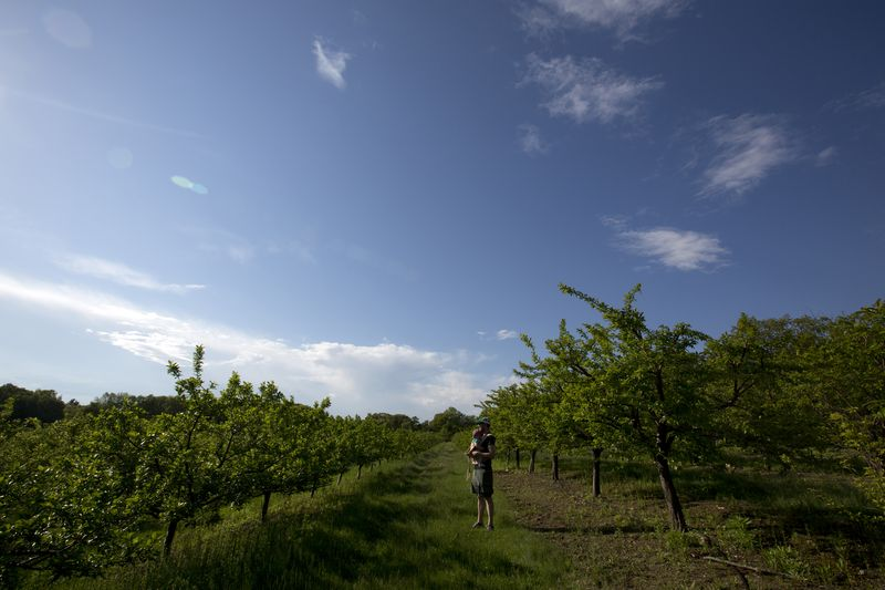 Orchardsm